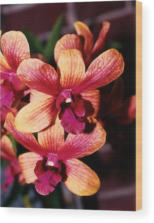Orchid Wood Print featuring the photograph Red Twins by Susanne Van Hulst