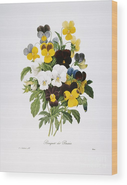 1833 Wood Print featuring the photograph Redoute: Pansy, 1833 by Granger