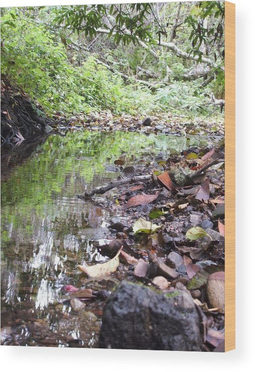 Woods Wood Print featuring the photograph Reflection by Shari Chavira