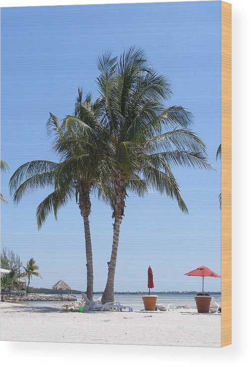 Palms Wood Print featuring the photograph Regal Palms by Jim Cooper