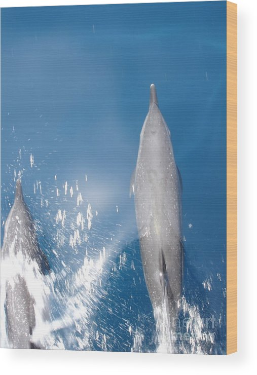 Dolphins Wood Print featuring the photograph Riding The Bow by Chad Natti