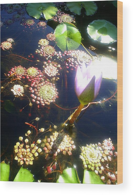 Flowers Wood Print featuring the photograph Root Of Beauty by Scarlett Royal
