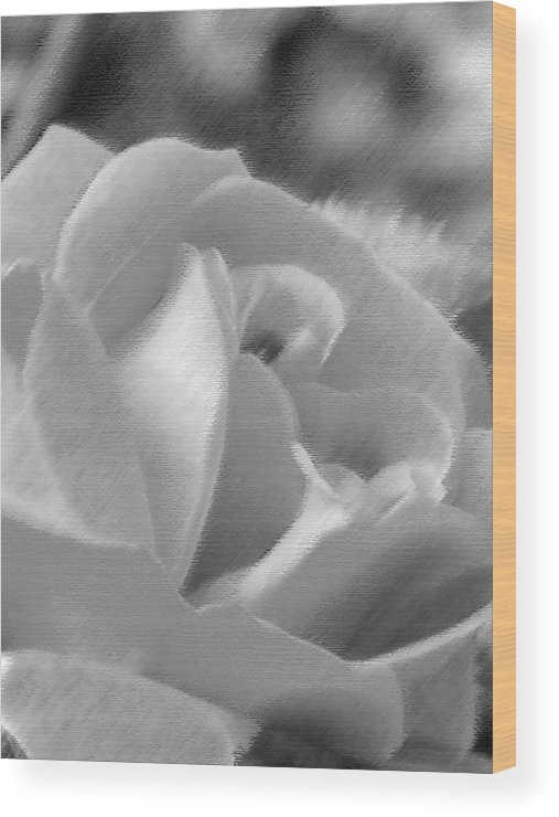 Flower Wood Print featuring the photograph Rose by John Bradburn