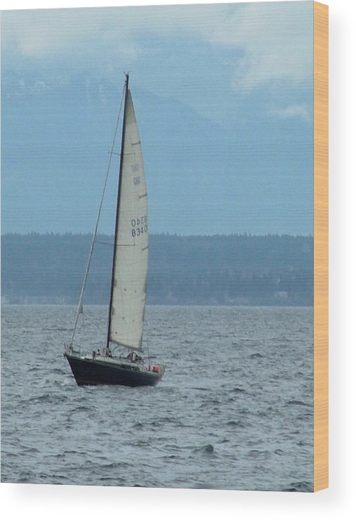 Sailboat Wood Print featuring the photograph Sailing The Pugent Sound by Nick Gustafson