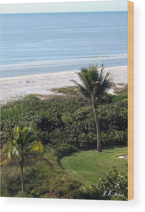 Florida Wood Print featuring the photograph Sanibel Island 2009 by Elizabeth Klecker