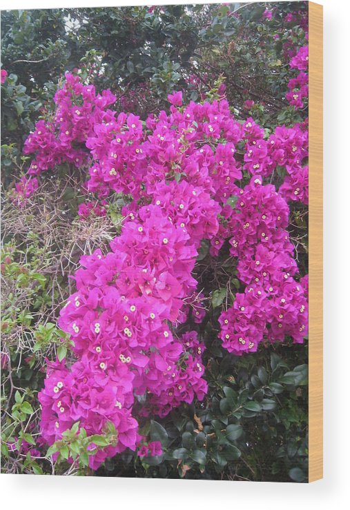 Bougainvillea Flowers Florida Wood Print featuring the photograph Scultpted Bougainvillea by Warren Thompson