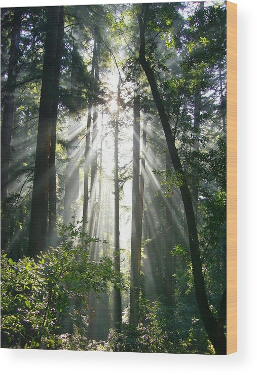 Tree Wood Print featuring the photograph Shining Light by Nancy Atherton Cheadle