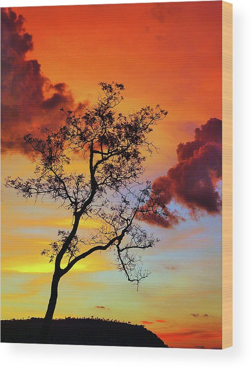 Landscape Wood Print featuring the photograph Silhouette Tree by Jose Carlos Patricio