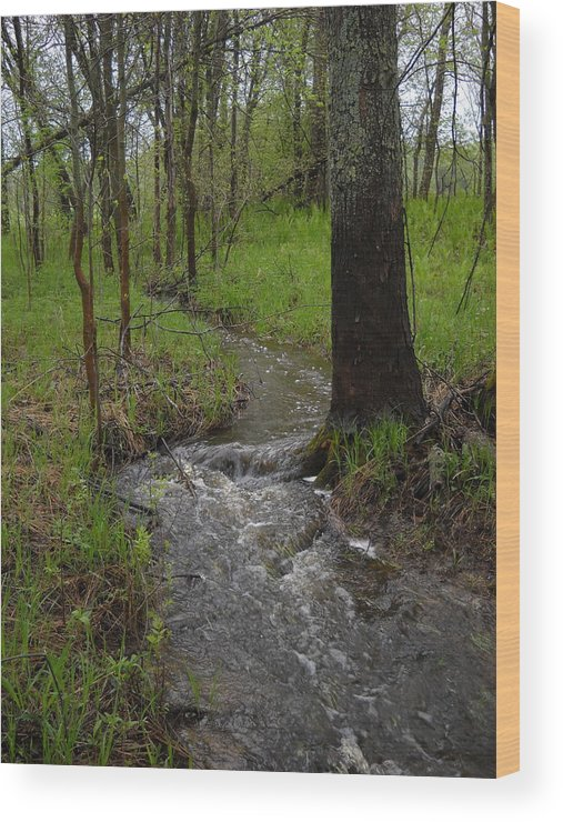 Stream Wood Print featuring the photograph Small Stream In The Woods by Kent Lorentzen