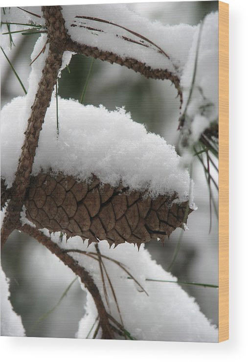 Landscape Wood Print featuring the photograph Snow Cone by Staci-Jill Burnley
