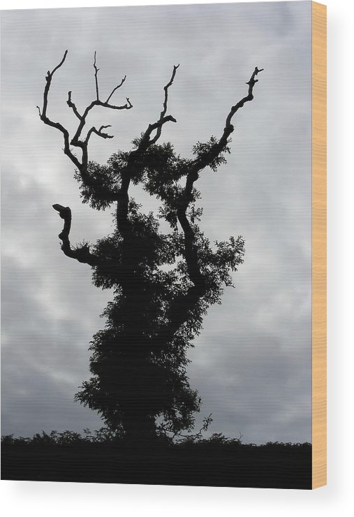 Tree Wood Print featuring the photograph Spooky Tree by Mary Lane