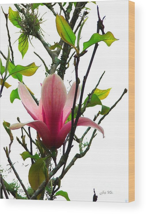 Pink Wood Print featuring the photograph Star Magnolia by Judy Waller