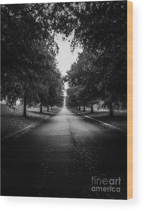 Trees Wood Print featuring the photograph The Lone Walk by Olga Burt