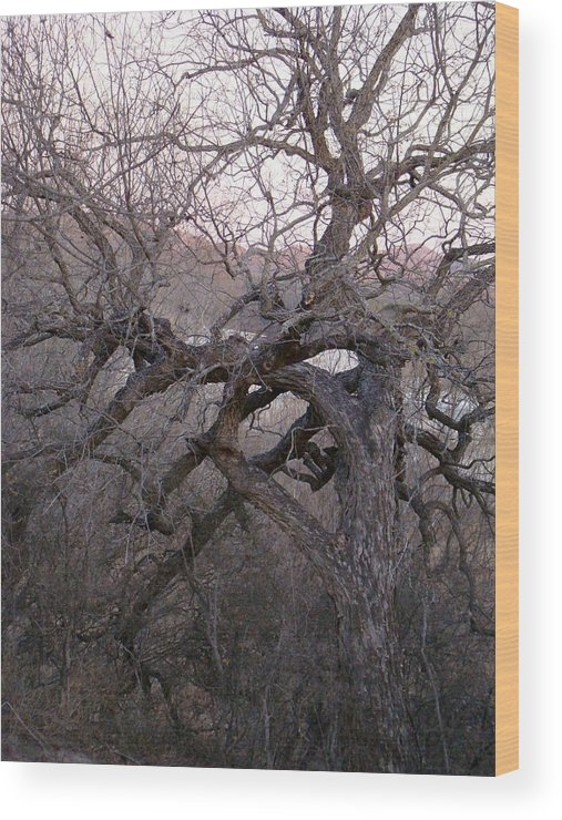 Pecan Tree Wood Print featuring the photograph The Mother Tree Two by Ana Villaronga