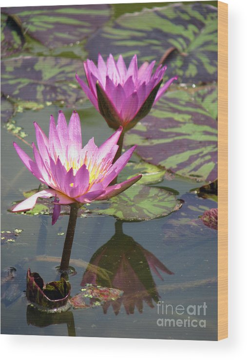 Lillypad Wood Print featuring the photograph The Pond by Amanda Barcon