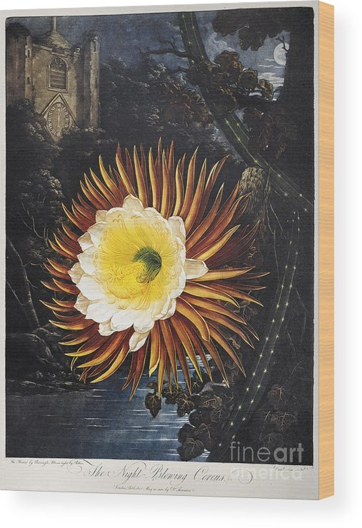 1800 Wood Print featuring the photograph Thornton: Cereus by Granger