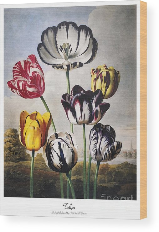 1798 Wood Print featuring the photograph Thornton: Tulips by Granger