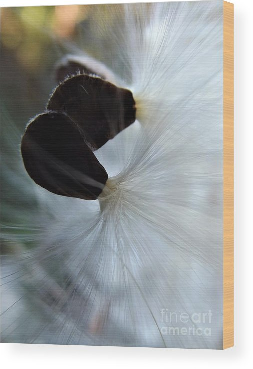 Flower Seeds Wood Print featuring the photograph Together At Last by Dee Winslow