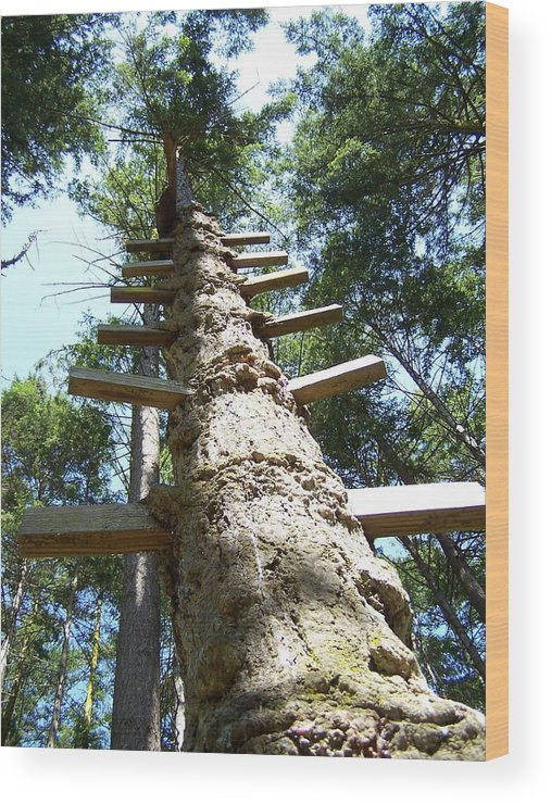 Ladder/ Tree Wood Print featuring the photograph Tree Ladder by Gene Ritchhart