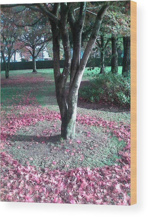 Tree Wood Print featuring the photograph Tree Ring by Abby Humphries