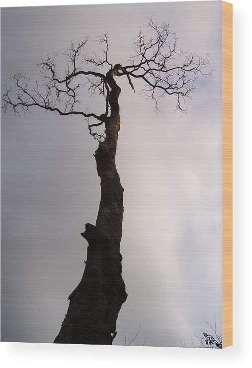 Tree Wood Print featuring the photograph Tree by Vishal Mutakekar