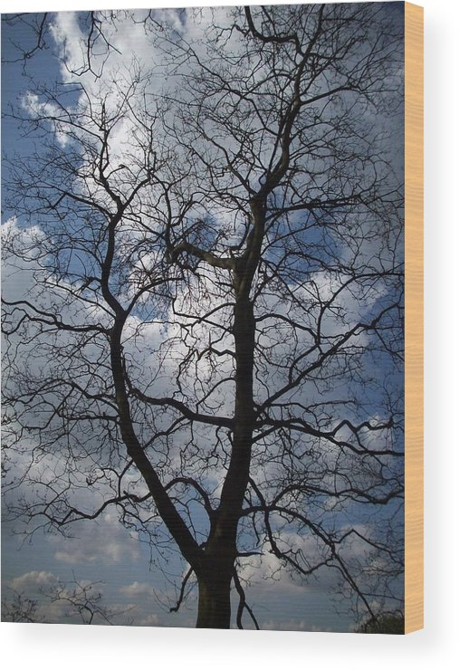 Trees Wood Print featuring the photograph Trees 1 by Helene Champaloux-Saraswati