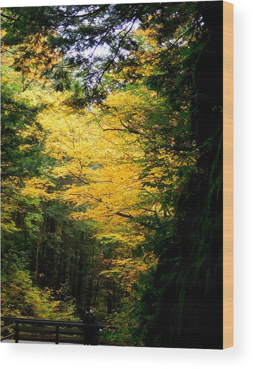 The Flume Wood Print featuring the photograph Trees Over The Flumes Gorge by Catherine Gagne