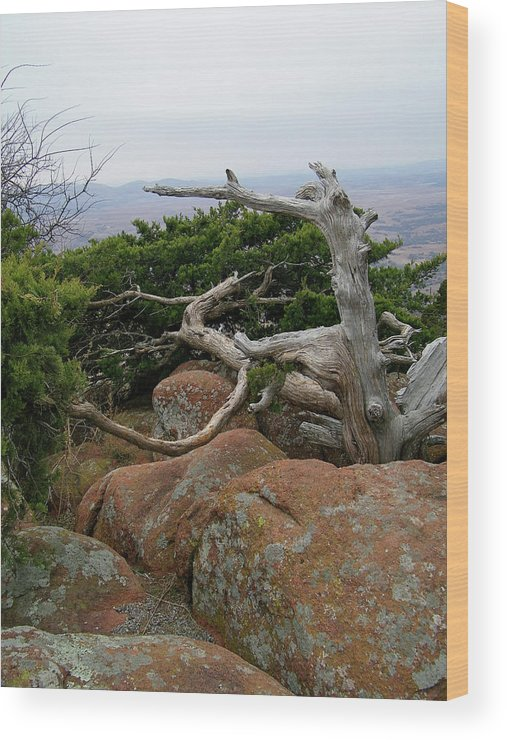 Wichita Mountains Wood Print featuring the photograph Twisted View by Gale Cochran-Smith
