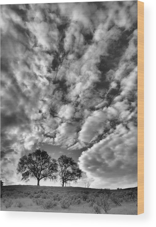 Trees Wood Print featuring the photograph Under Cover In Black And White by Tara Turner
