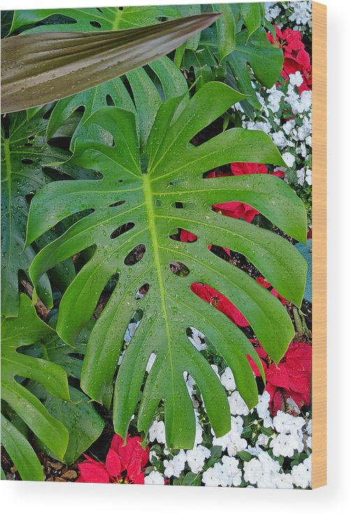 Waikiki Wood Print featuring the photograph Waikiki Split Leaf by Robert Meyers-Lussier