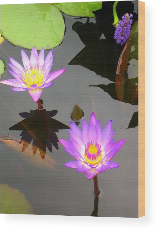 Water Lilies Wood Print featuring the photograph Water Lilies by Caroline Urbania Naeem