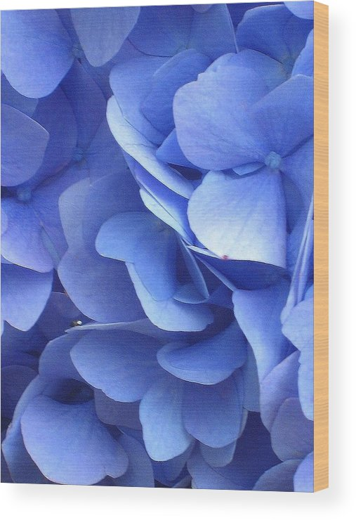 Floral Wood Print featuring the photograph Waves Of Blue by Marla McFall