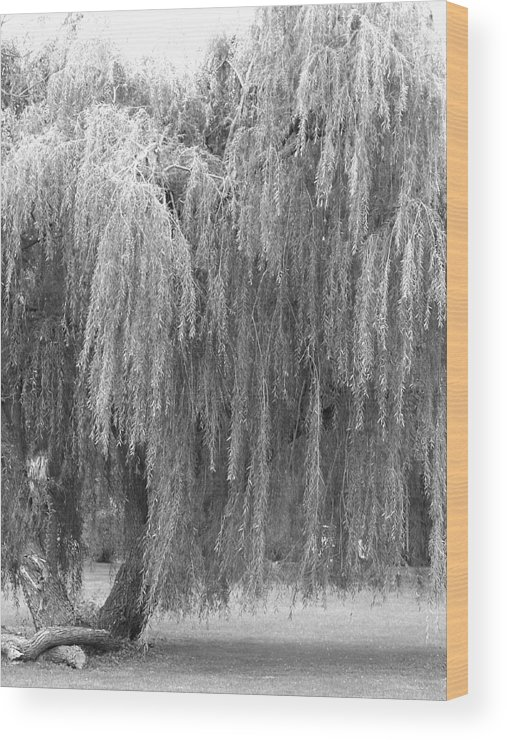 Weeping Willow Wood Print featuring the photograph wEEPING wILLOW by Amy Bengard