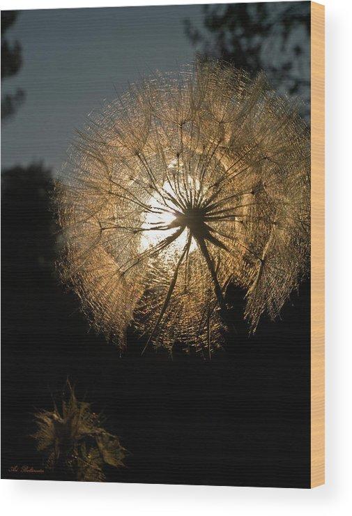 Summer Wood Print featuring the photograph Welcome Summer by Arik Baltinester