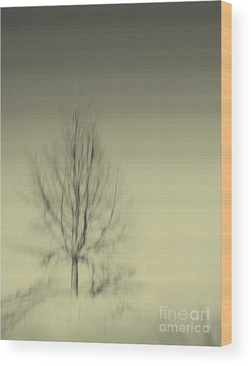 Dipasquale Wood Print featuring the photograph When You Wake Up I Will Have Gone by Dana DiPasquale