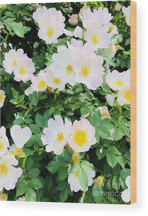 Flowers Wood Print featuring the photograph White Flower by Ronalyn Ferrer