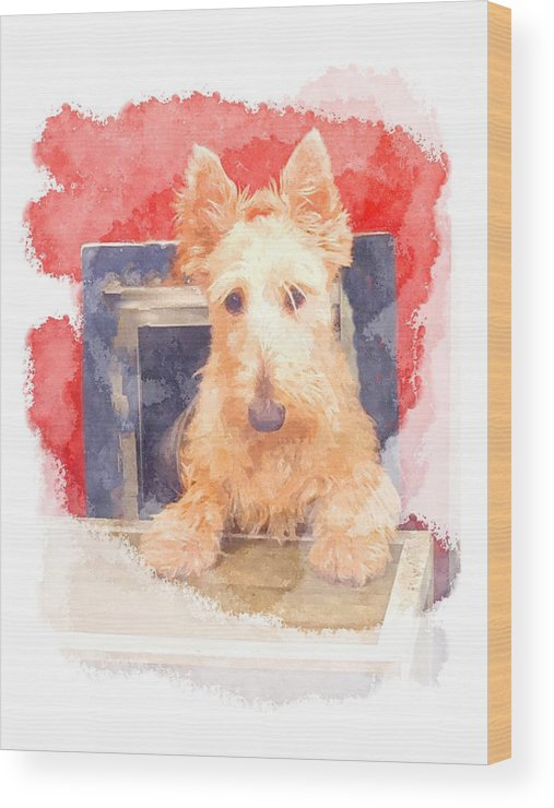 Scottish Terrier Wood Print featuring the photograph Whos That Dog In The Window? by Image Takers Photography LLC - Carol Haddon