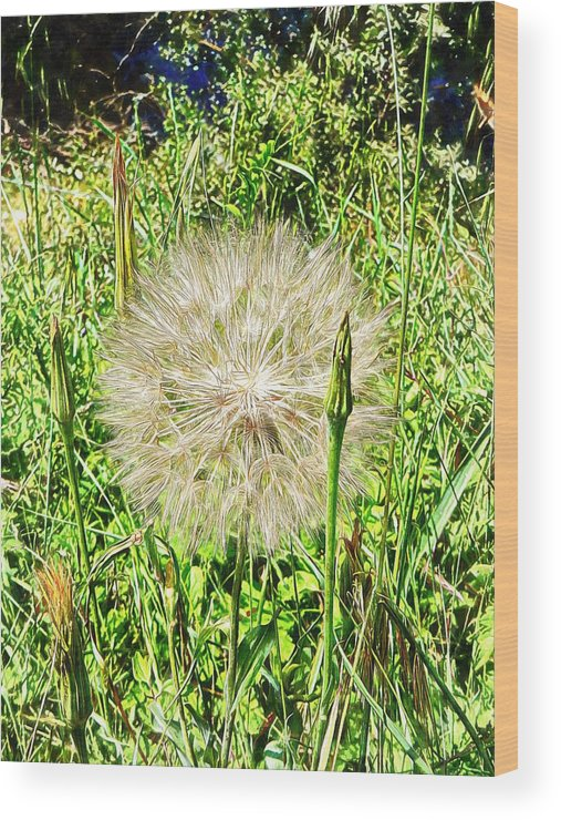 Flora Wood Print featuring the photograph Yellow Goats Beard 1 by Dorothy Berry-Lound