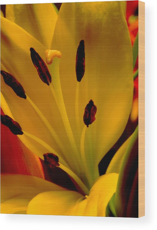 Lilly Wood Print featuring the photograph Yellow Lilly by Doc Howell