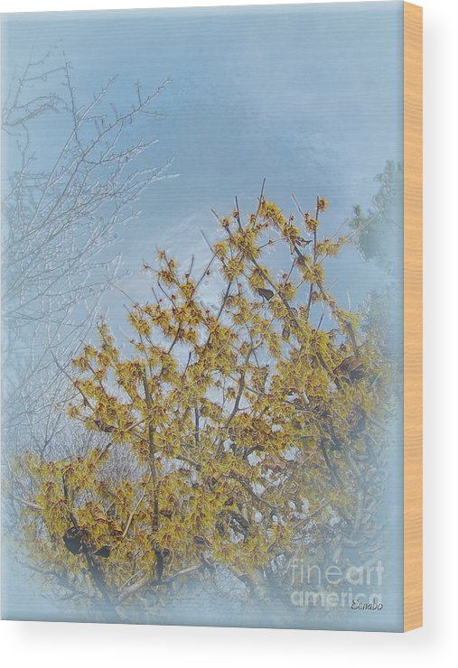 Tree Wood Print featuring the photograph Yellow Tree by Eena Bo