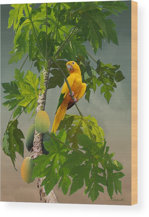 Bird Wood Print featuring the digital art Golden Parakeet In Papaya Tree by M Spadecaller