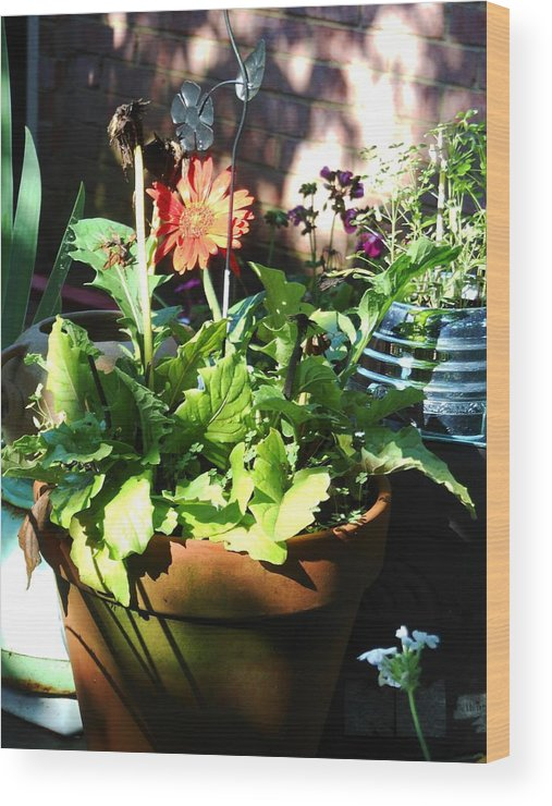 Blue Wood Print featuring the photograph Old Pots New Blooms by Lord Frederick Lyle Morris - Disabled Veteran