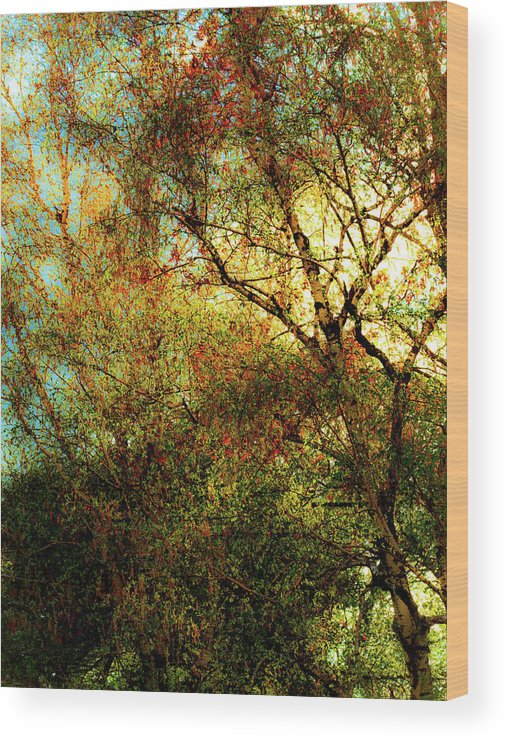 Aged Wood Print featuring the photograph Spring Dream by Onyonet Photo Studios