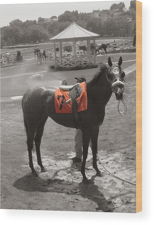 Suffolk Downs Wood Print featuring the photograph Lucky No. 7 by Heather Weikel