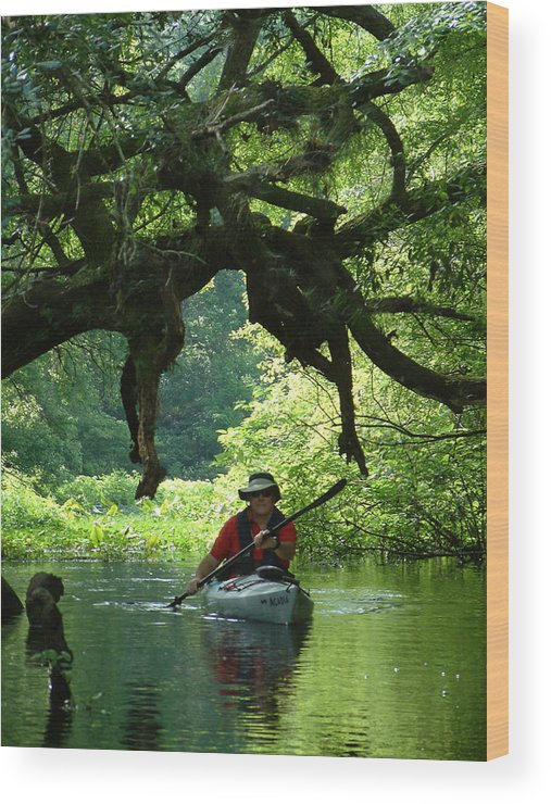 Kayak Wood Print featuring the photograph Kayaking In Dismal Swamp by Charles Ridgway