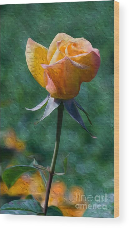 Flower Wood Print featuring the digital art Rose Prominence II by Kenneth Montgomery