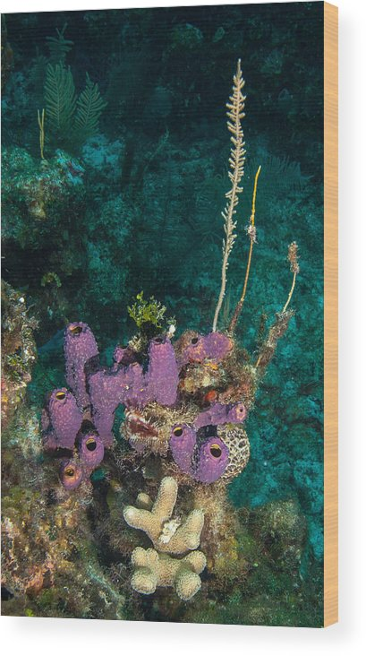 Belize Wood Print featuring the photograph Sponge Condo by Jean Noren