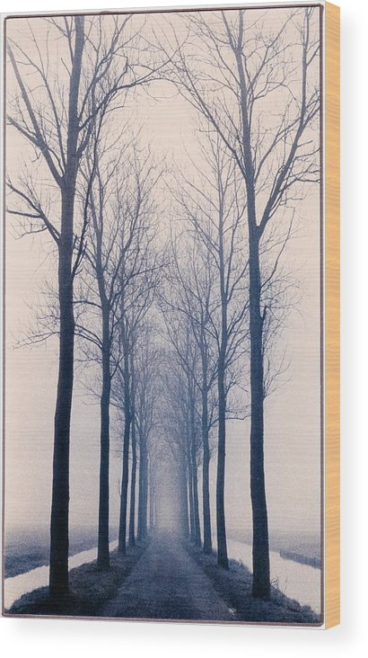 Graphic Wood Print featuring the photograph Nesserlaan by David Halperin