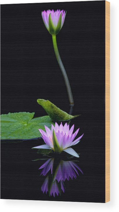 Water Wood Print featuring the photograph Water Lilies And Reflections by Margaret Barry