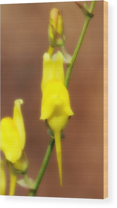 Yellow Flower Wood Print featuring the photograph Yellow Flowers by Kevin Phipps